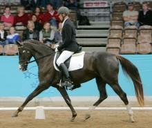 The Virtual Equestrian - Jaybee Farm Sale Preview - Jaybee @ D&JWTS