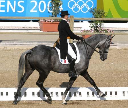 The Virtual Equestrian Olympic News Olympics