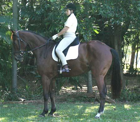 Jody Wilkinson on Cyberhorse Virtual Equestrian   Cyberhorse Virtual Equestrian