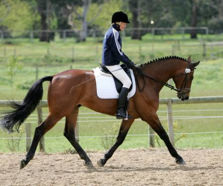 The Virtual Equestrian Berwick Amp District Dressage Club
