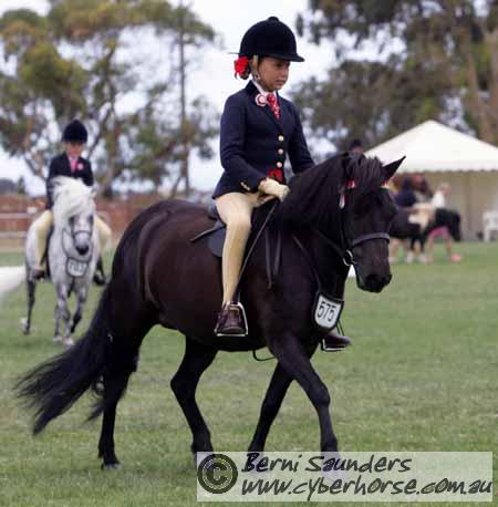 The Virtual Equestrian - VAS Ltd Saddle Horse ...