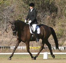 The Virtual Equestrian South East Qld Dressage