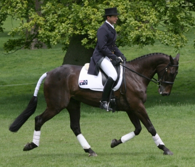 The Virtual Equestrian Busy Few Weeks For Australasian