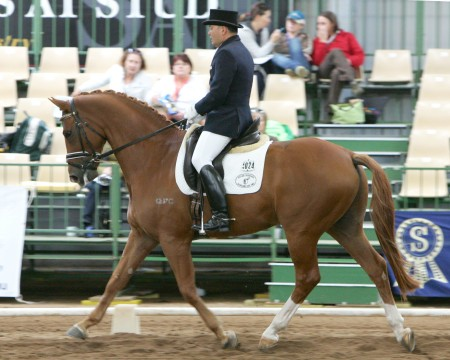 Image Result For Hanoverian Horse Society Gb