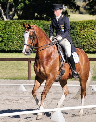 The Virtual Equestrian...