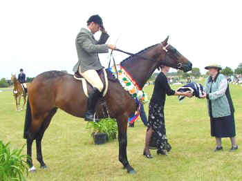 The Virtual Equestrian Barastoc Horse Of The Year 2002